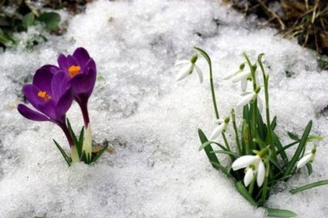 Картинки перший день весни